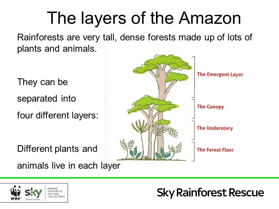 The layers of the Amazon