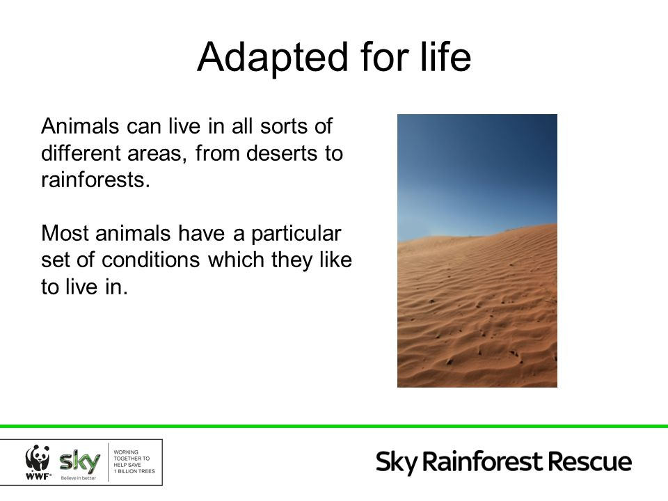 Adapted for life Animals can live in all sorts of different areas, from deserts to rainforests.