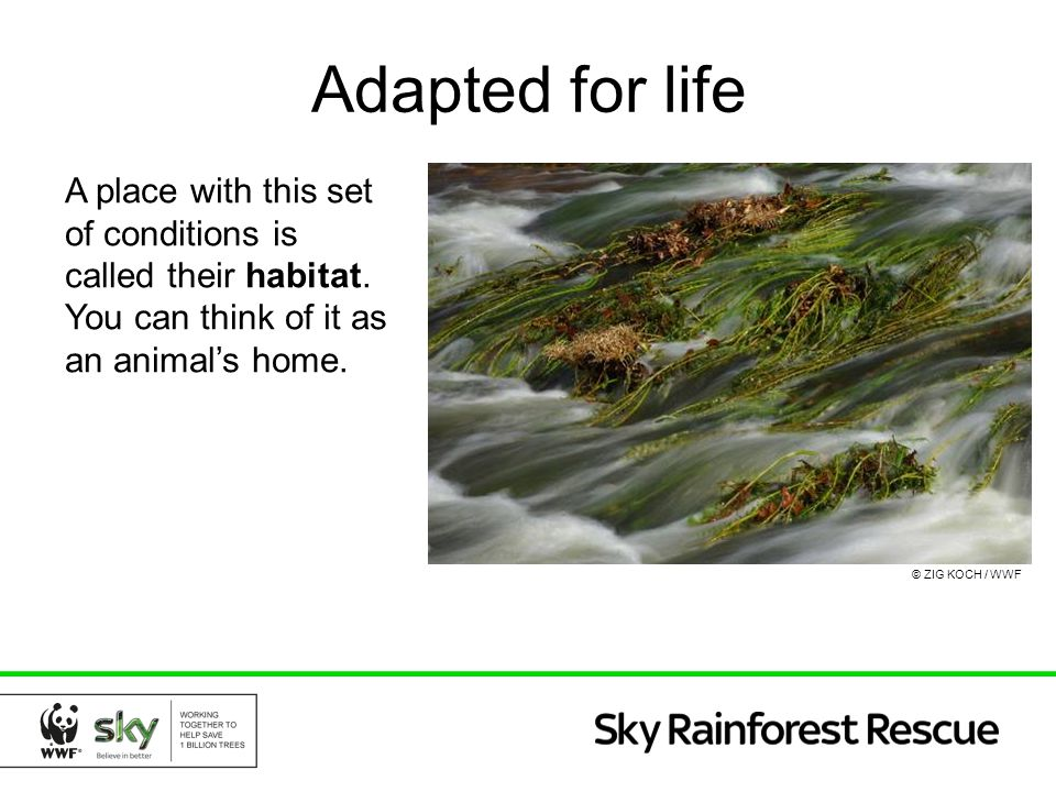 Adapted for life A place with this set of conditions is called their habitat. You can think of it as an animal's home.
