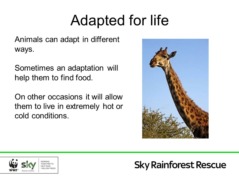 Adapted for life Animals can adapt in different ways.