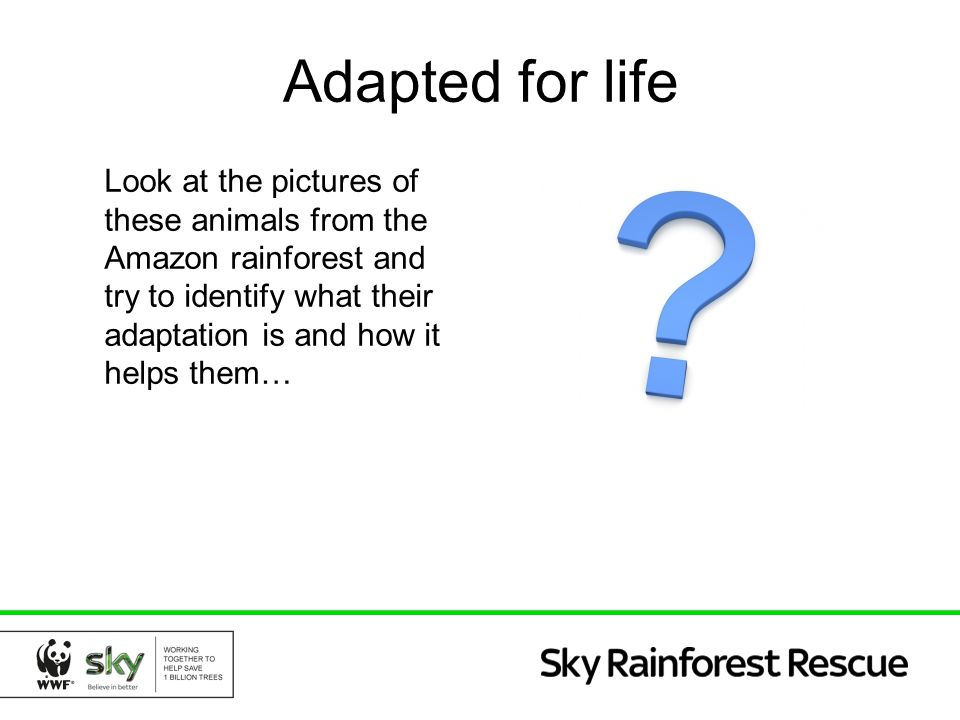 Adapted for life Look at the pictures of these animals from the Amazon rainforest and try to identify what their adaptation is and how it helps them…