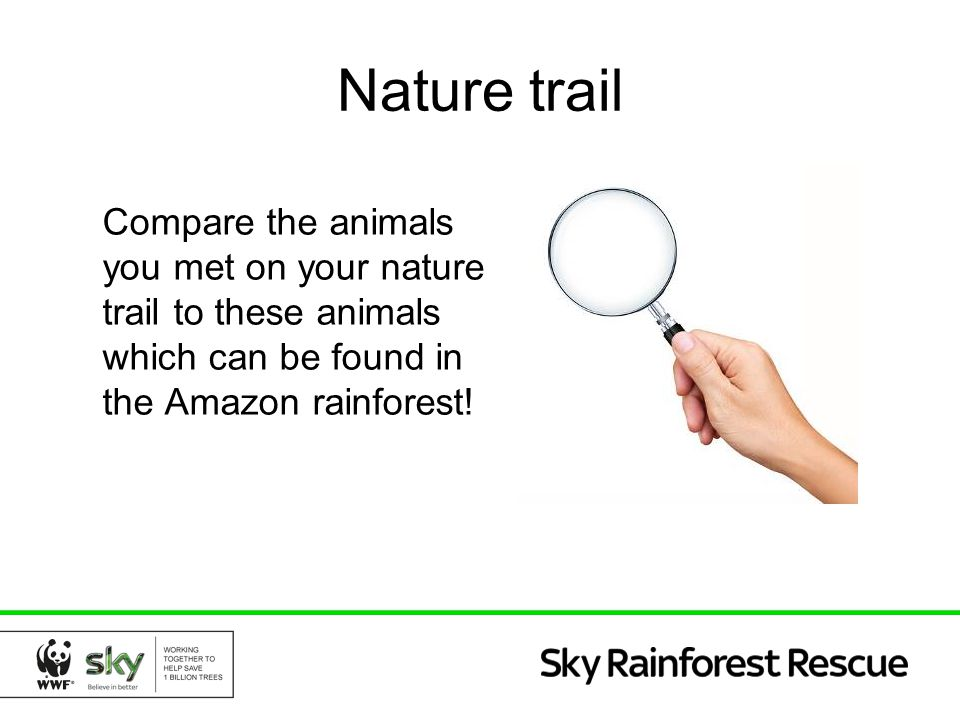 Nature trail Compare the animals you met on your nature trail to these animals which can be found in the Amazon rainforest!