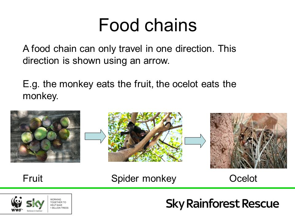 Food chains A food chain can only travel in one direction. This direction is shown using an arrow.