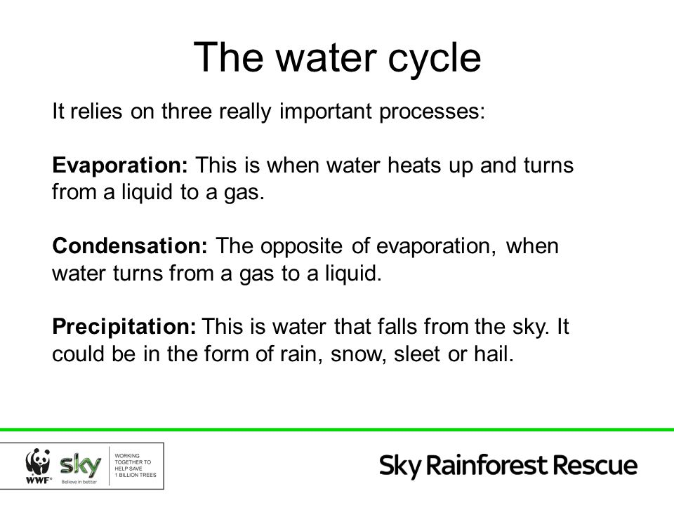 The water cycle It relies on three really important processes: