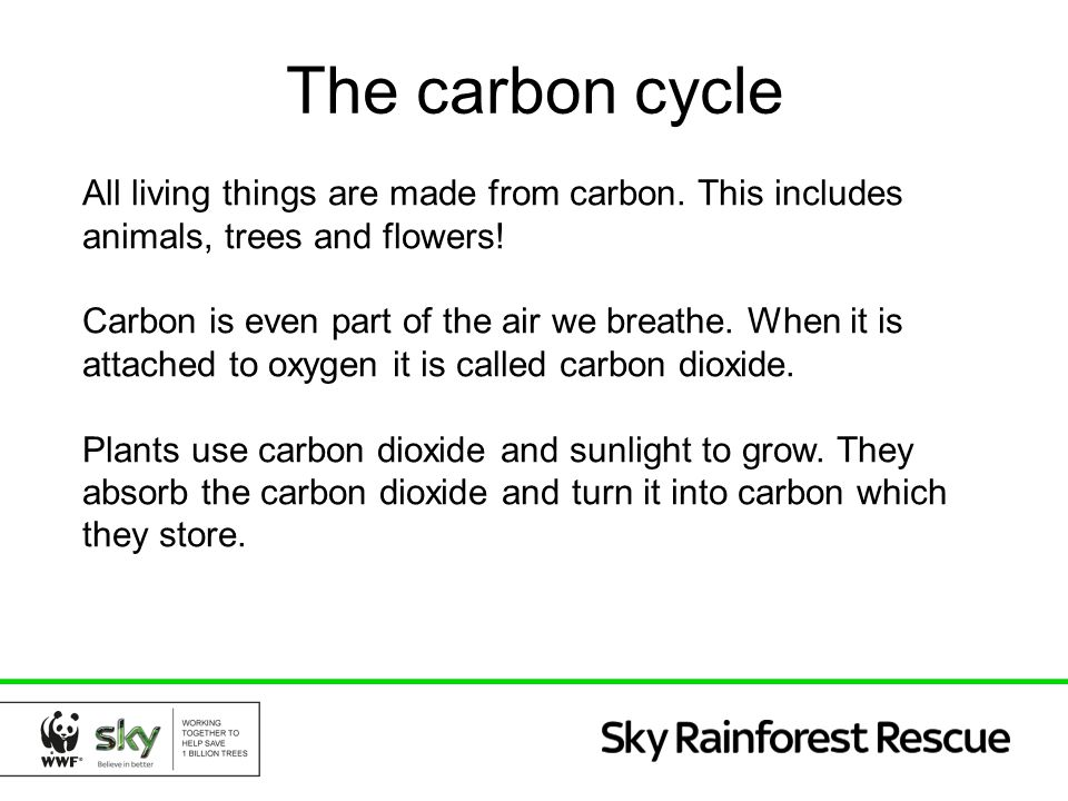 The carbon cycle All living things are made from carbon. This includes animals, trees and flowers!