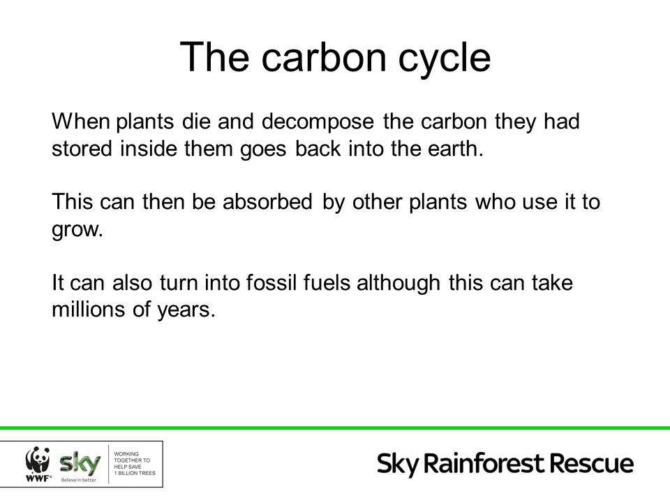 The carbon cycle When plants die and decompose the carbon they had stored inside them goes back into the earth.