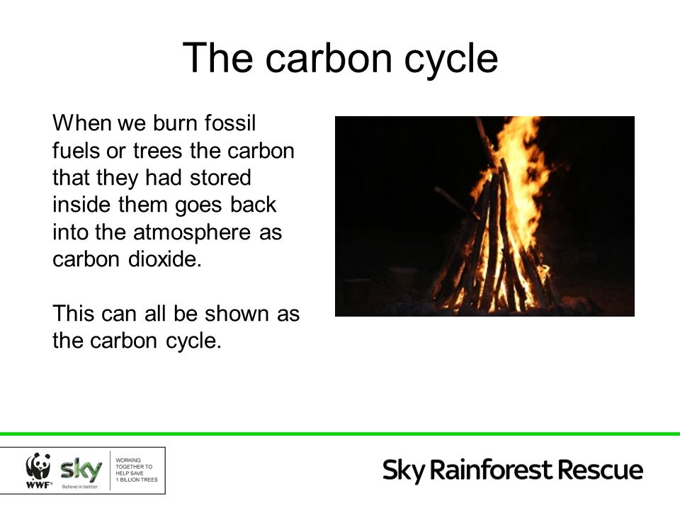 The carbon cycle When we burn fossil fuels or trees the carbon that they had stored inside them goes back into the atmosphere as carbon dioxide.