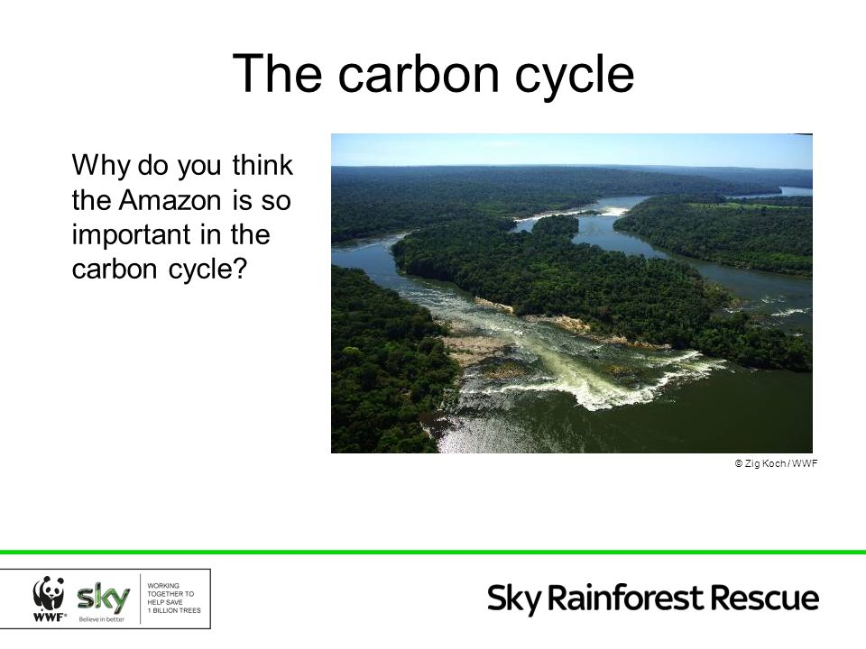 The carbon cycle Why do you think the Amazon is so important in the carbon cycle © Zig Koch / WWF