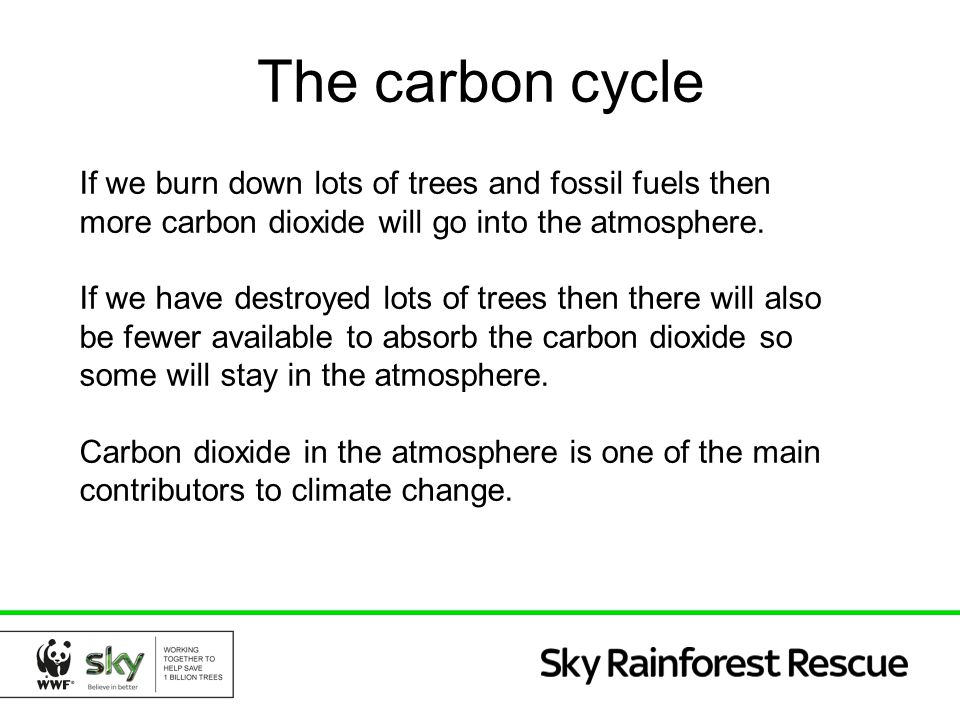 The carbon cycle If we burn down lots of trees and fossil fuels then more carbon dioxide will go into the atmosphere.