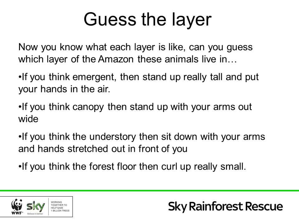 Guess the layer Now you know what each layer is like, can you guess which layer of the Amazon these animals live in…