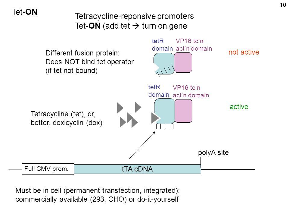 Tetracycline-reponsive promoters Tet-ON (add tet  turn on gene