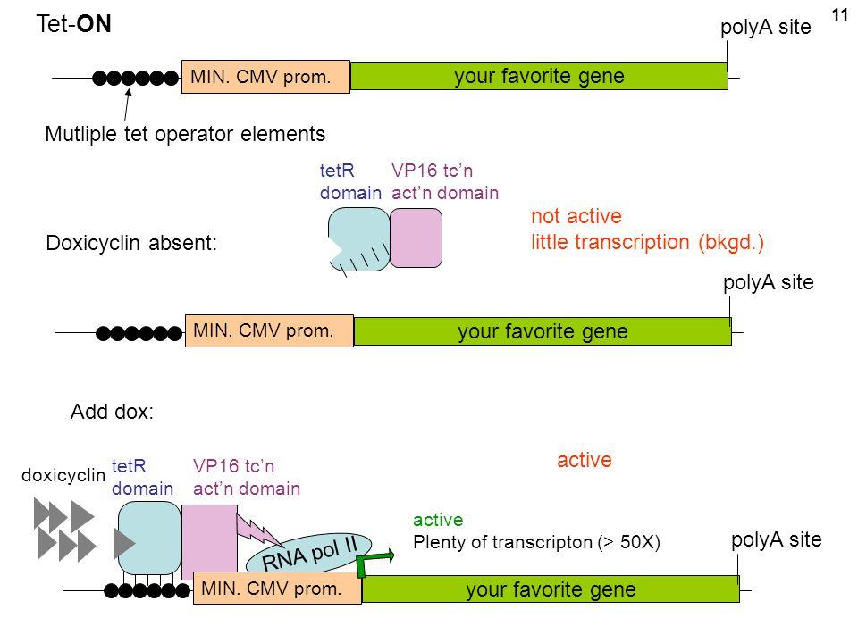 Tet-ON polyA site your favorite gene Mutliple tet operator elements