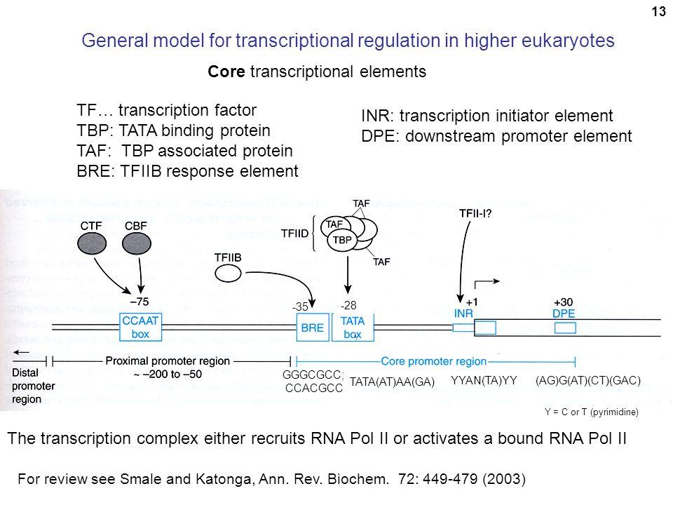 General model for transcriptional regulation in higher eukaryotes