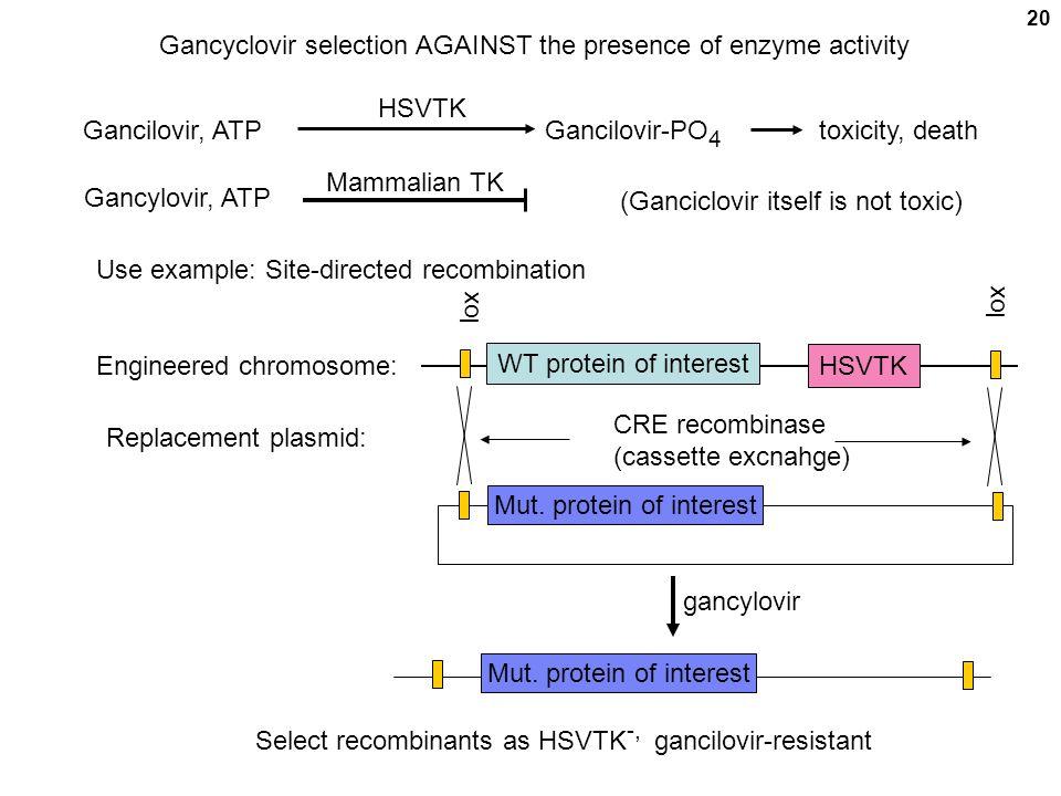 Gancyclovir selection AGAINST the presence of enzyme activity