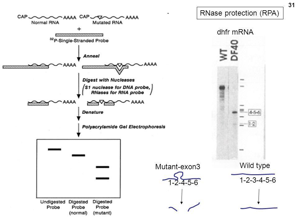 RNase protection (RPA)