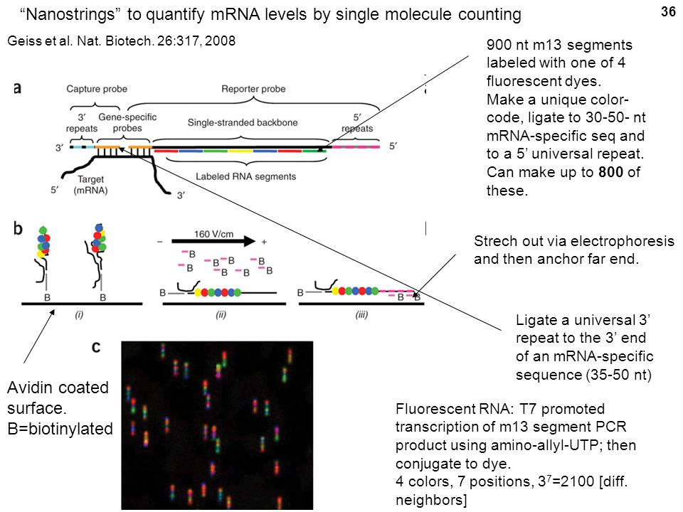 Nanostrings to quantify mRNA levels by single molecule counting