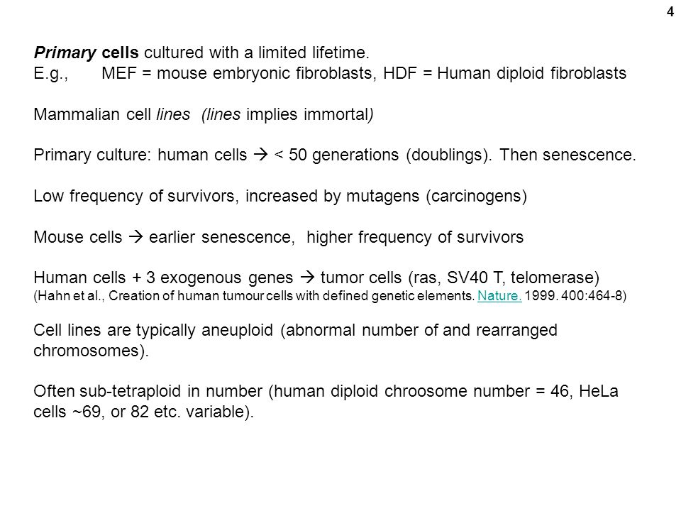 Primary cells cultured with a limited lifetime.