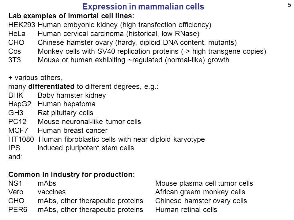 Expression in mammalian cells