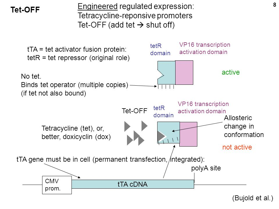 Engineered regulated expression: Tetracycline-reponsive promoters