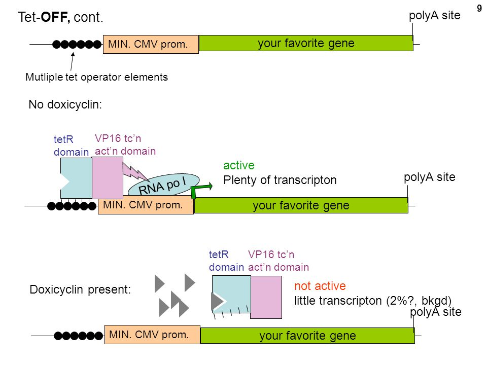 Tet-OFF, cont. polyA site your favorite gene No doxicyclin: active