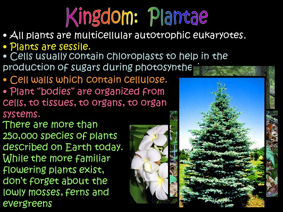 Kingdom: Plantae All plants are multicellular autotrophic eukaryotes.