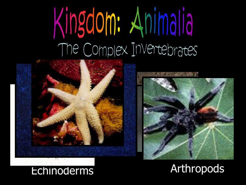 The Complex Invertebrates