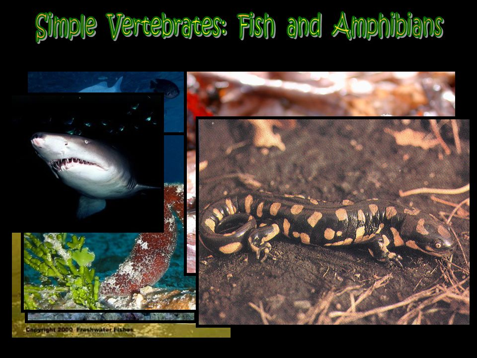 Simple Vertebrates: Fish and Amphibians