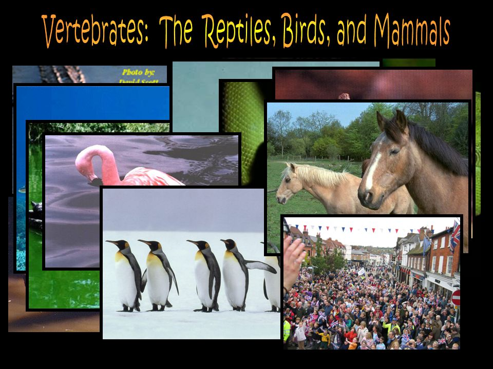 Vertebrates: The Reptiles, Birds, and Mammals