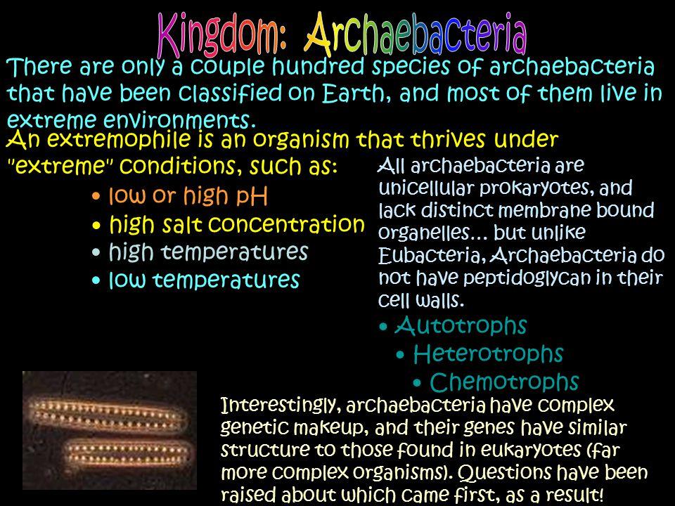 Kingdom: Archaebacteria