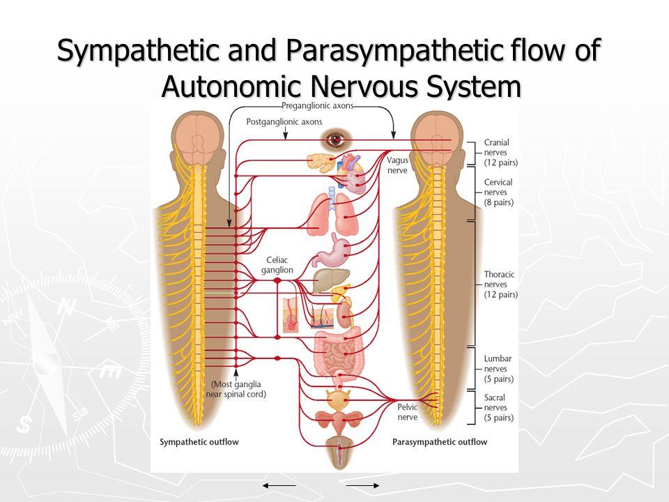 Sympathetic and Parasympathetic flow of Autonomic Nervous System