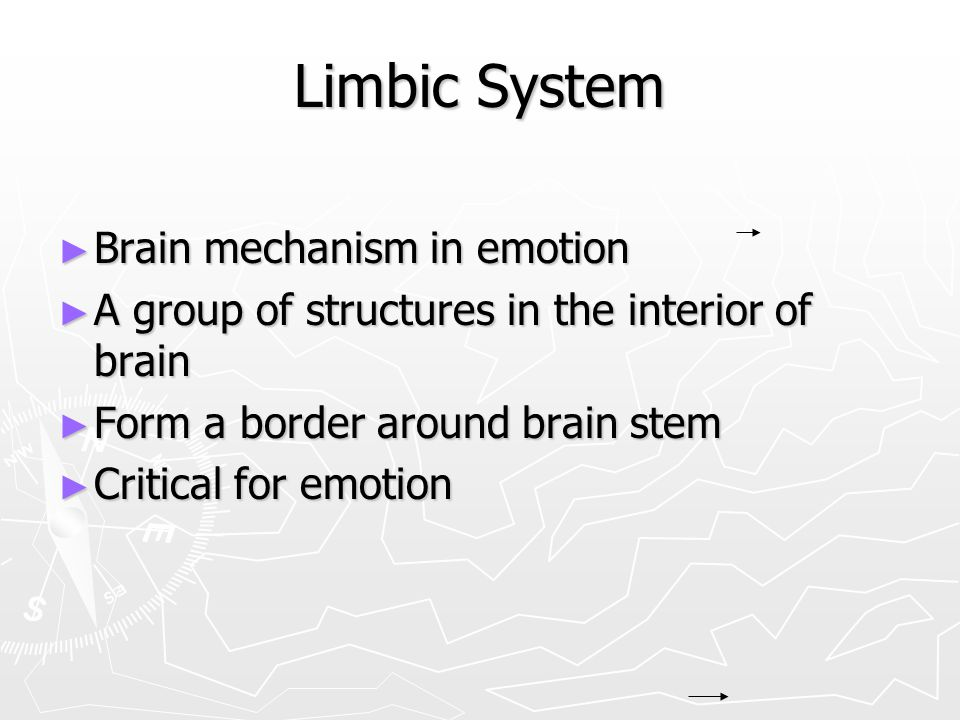 Limbic System Brain mechanism in emotion