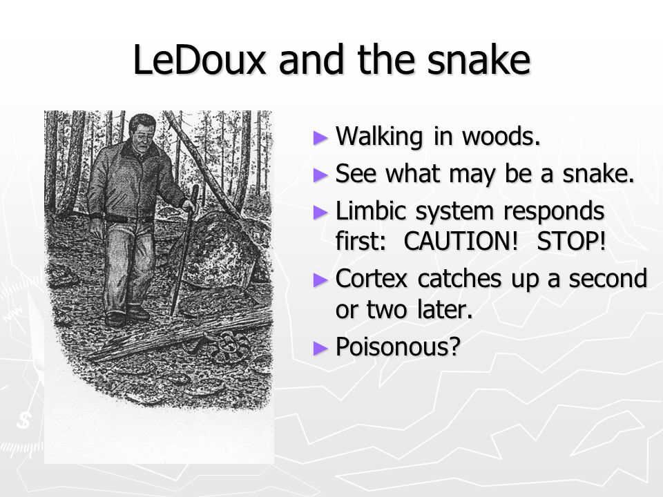 LeDoux and the snake Walking in woods. See what may be a snake.