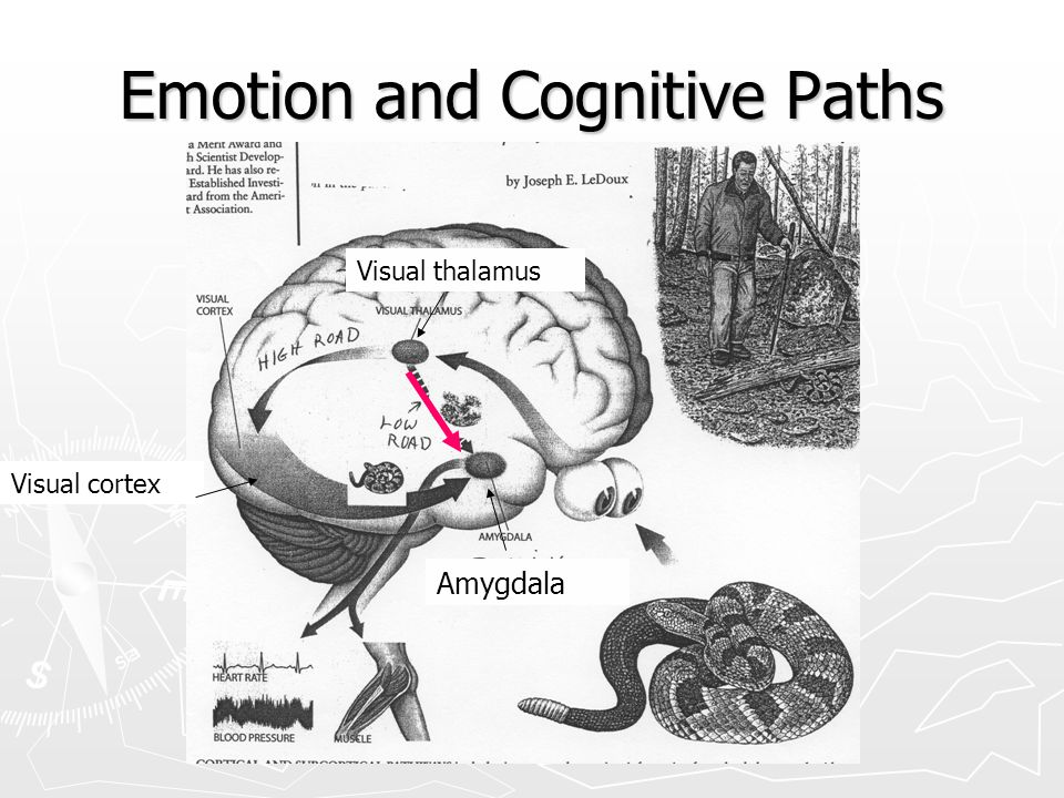 Emotion and Cognitive Paths