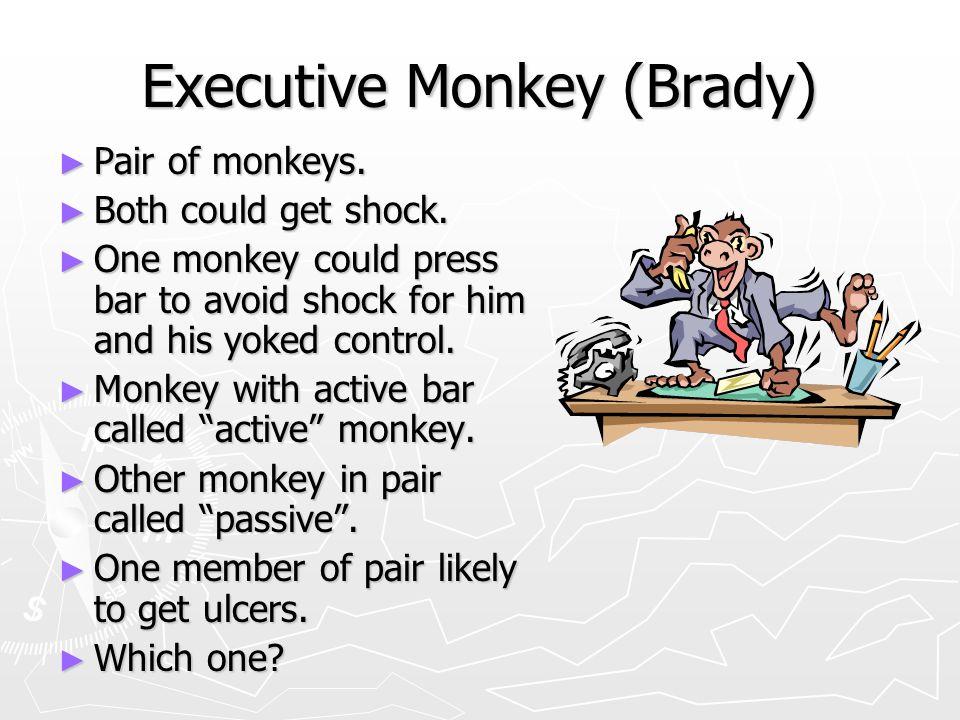 Executive Monkey (Brady)