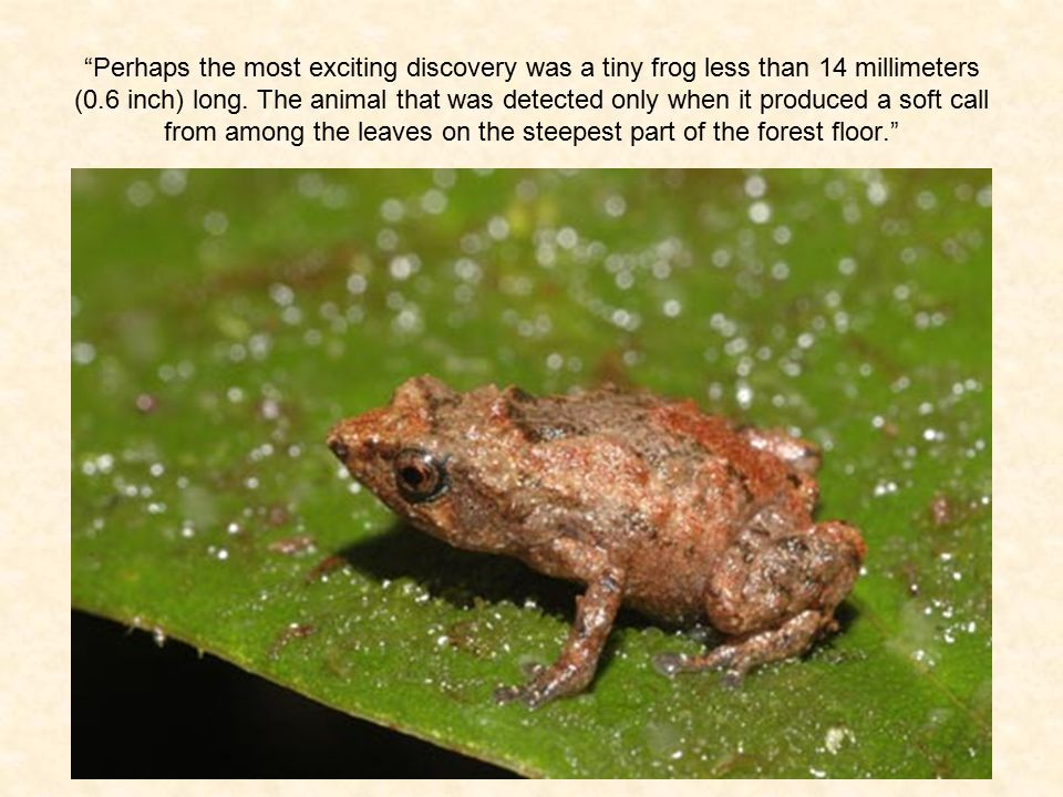Perhaps the most exciting discovery was a tiny frog less than 14 millimeters (0.6 inch) long.