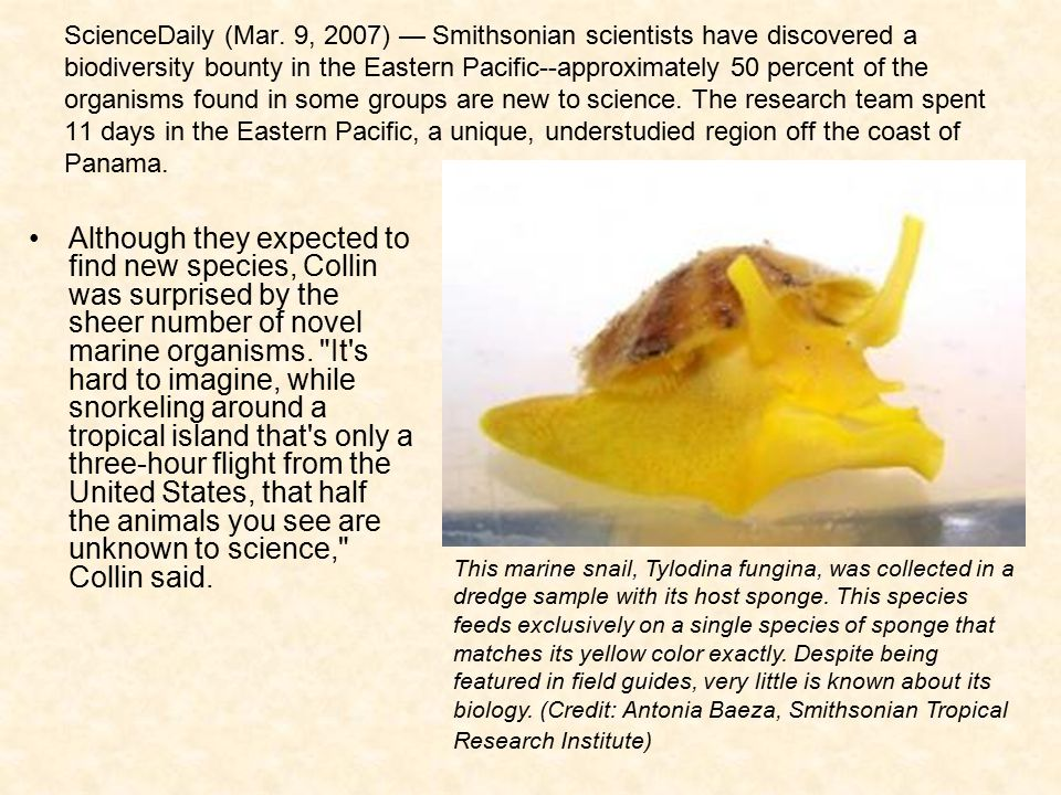 ScienceDaily (Mar. 9, 2007) — Smithsonian scientists have discovered a biodiversity bounty in the Eastern Pacific--approximately 50 percent of the organisms found in some groups are new to science. The research team spent 11 days in the Eastern Pacific, a unique, understudied region off the coast of Panama.