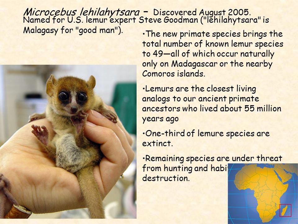Microcebus lehilahytsara – Discovered August 2005. Named for U. S