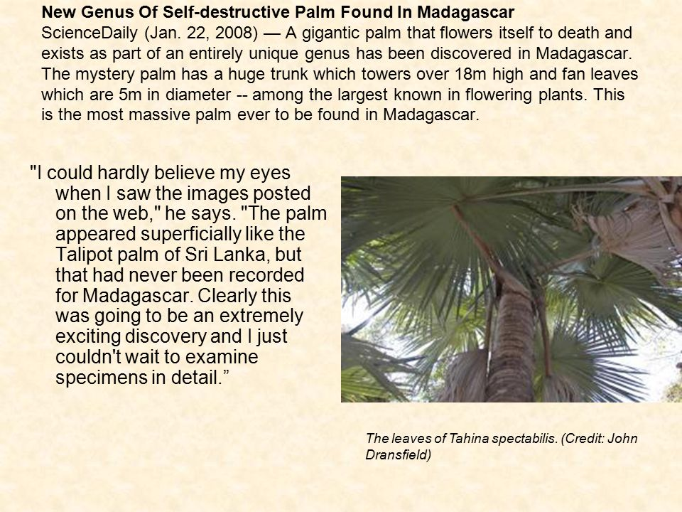 New Genus Of Self-destructive Palm Found In Madagascar ScienceDaily (Jan. 22, 2008) — A gigantic palm that flowers itself to death and exists as part of an entirely unique genus has been discovered in Madagascar. The mystery palm has a huge trunk which towers over 18m high and fan leaves which are 5m in diameter -- among the largest known in flowering plants. This is the most massive palm ever to be found in Madagascar.