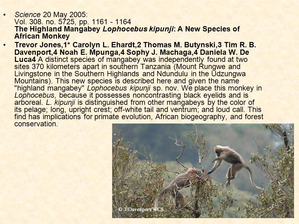 Science 20 May 2005: Vol. 308. no. 5725, pp. 1161 - 1164 The Highland Mangabey Lophocebus kipunji: A New Species of African Monkey