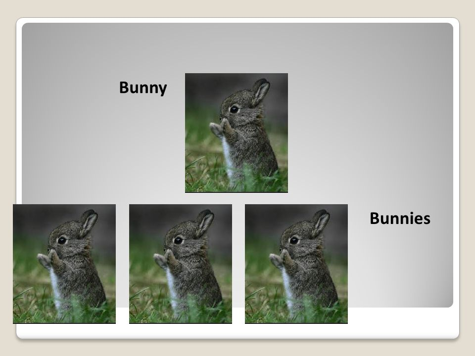 Bunny Bunnies