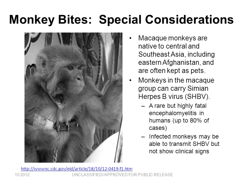 Monkey Bites: Special Considerations