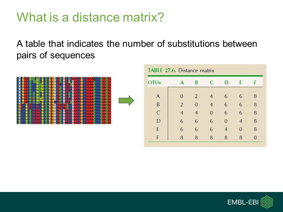 What is a distance matrix