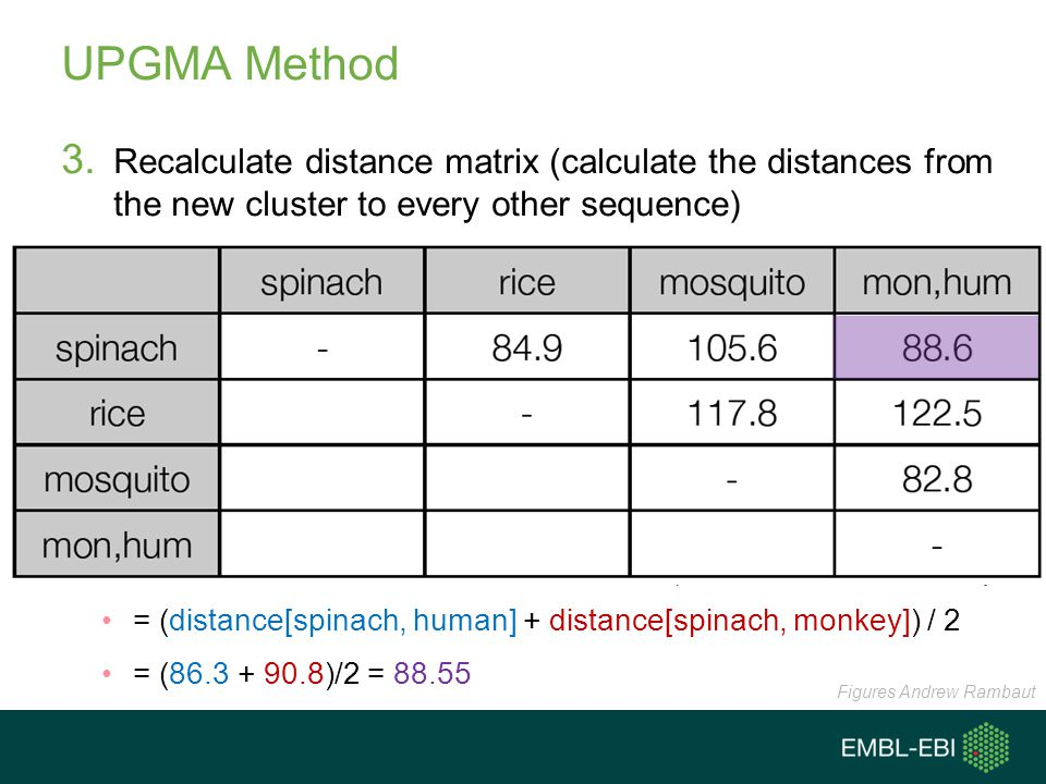 UPGMA Method Recalculate distance matrix (calculate the distances from the new cluster to every other sequence)