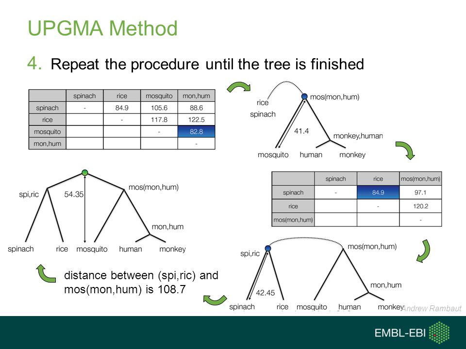 UPGMA Method Repeat the procedure until the tree is finished