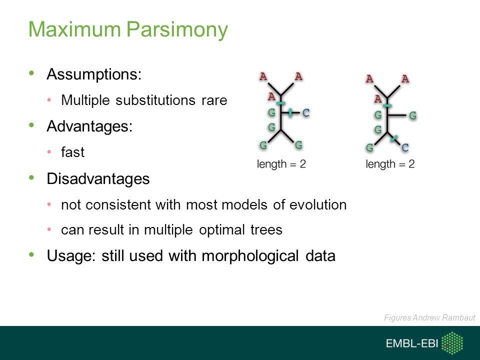 Maximum Parsimony Assumptions: Advantages: Disadvantages