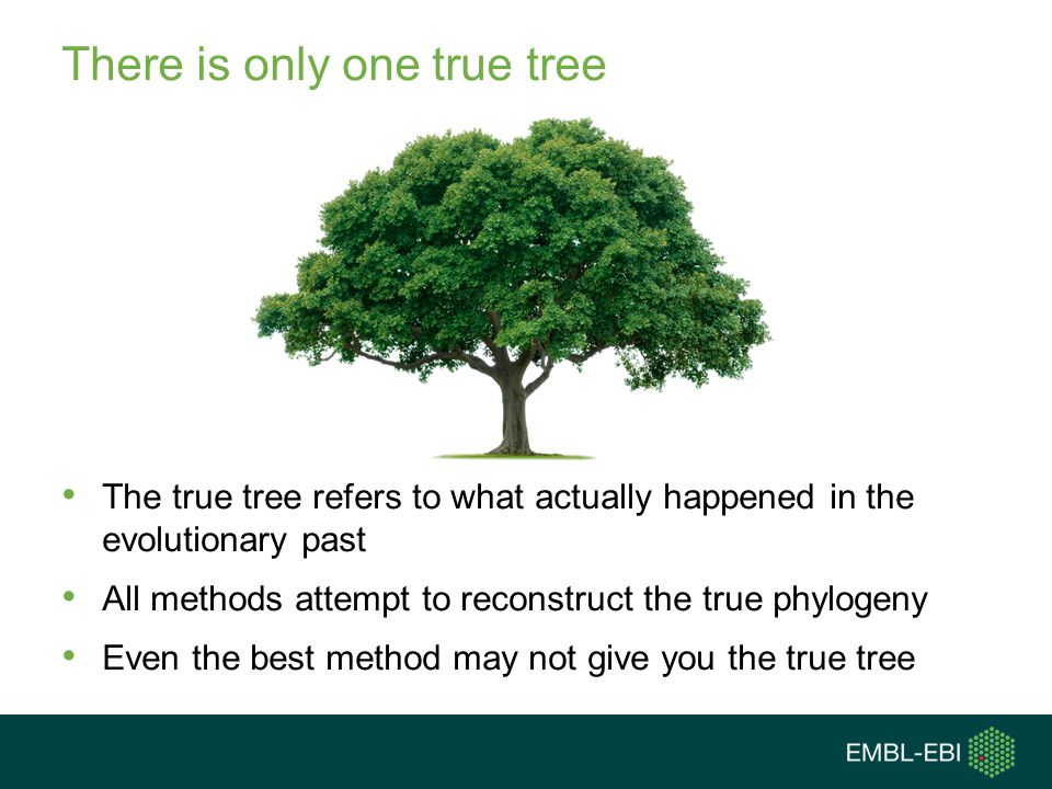 There is only one true tree