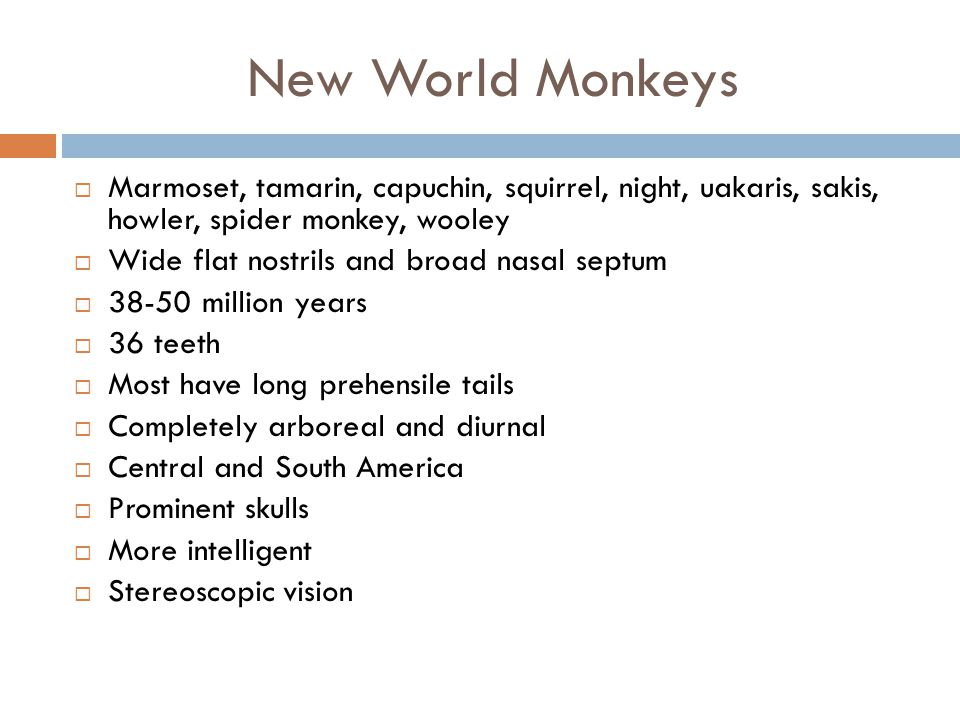 New World Monkeys Marmoset, tamarin, capuchin, squirrel, night, uakaris, sakis, howler, spider monkey, wooley.