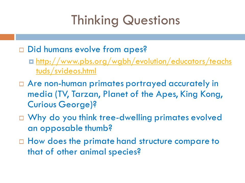 Thinking Questions Did humans evolve from apes