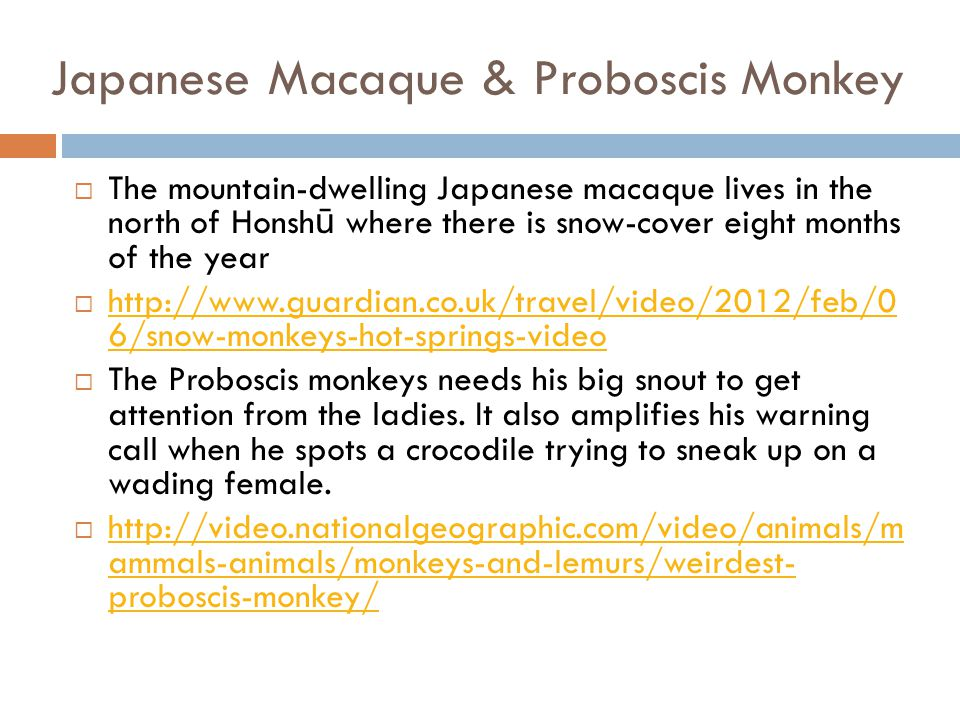 Japanese Macaque & Proboscis Monkey
