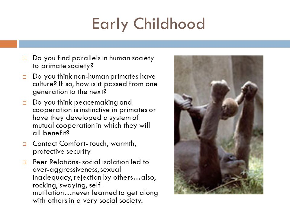 Early Childhood Do you find parallels in human society to primate society